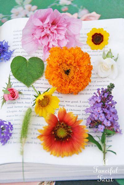 Book love 4