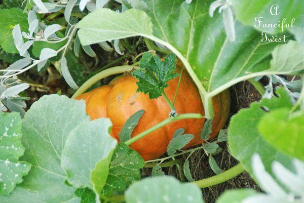 Garden grow 37