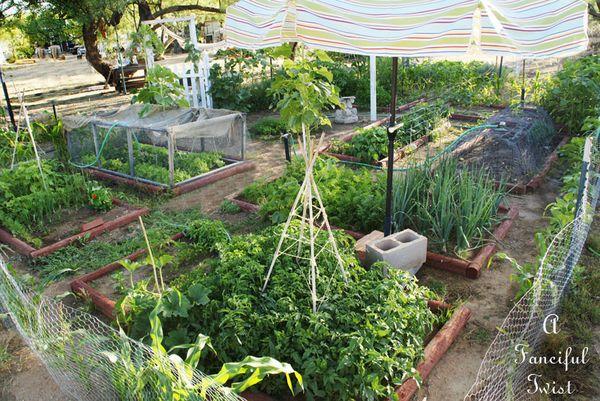 My garden 1