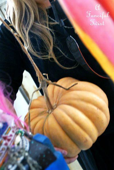 Pumpkin and stuff 2