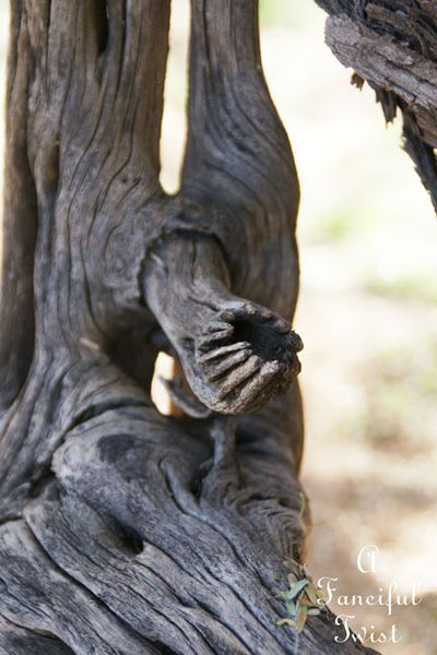 Little hands coming out of the wood 5