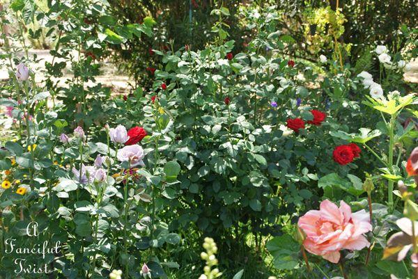 Garden ready 41