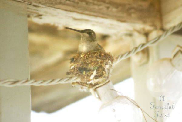 Hummingbird nest 5