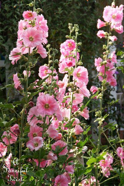 In the garden 24
