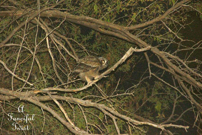 Owlie 3