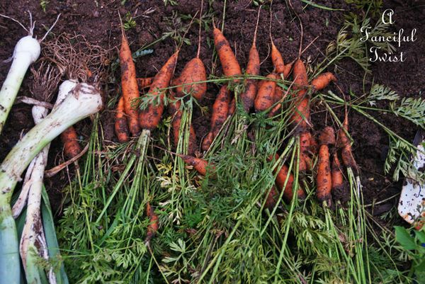 Harvesting 6