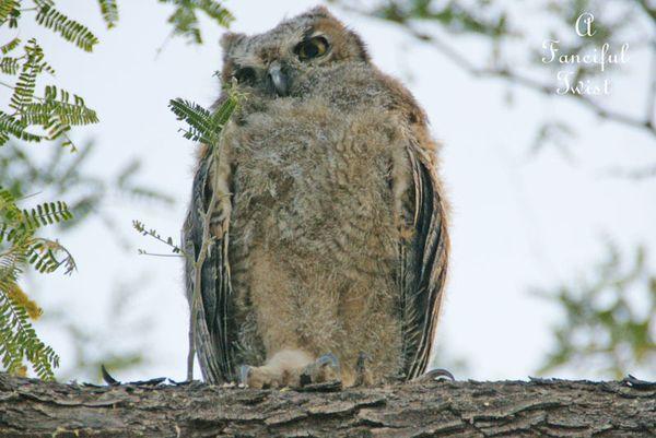 Owlie days 6
