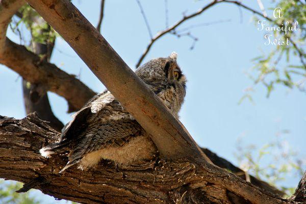 Owlie days 3