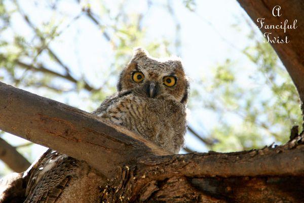 Owlie days 5