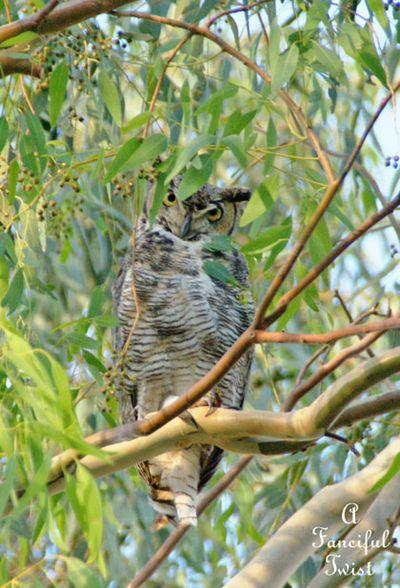 Owlie days 10