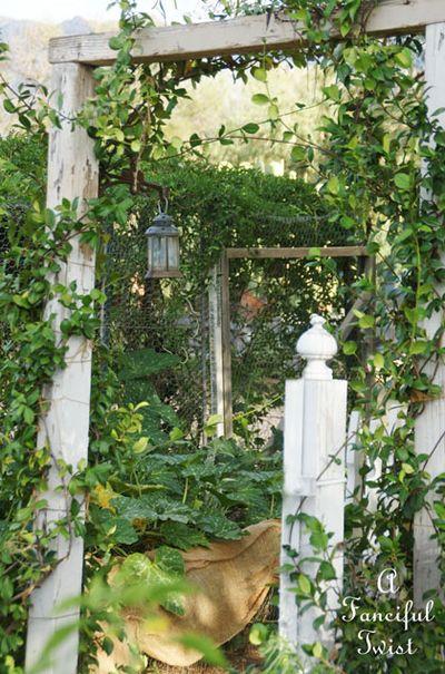 Summer garden 20