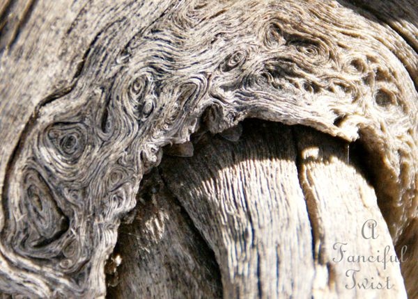 Little hands coming out of the wood 8