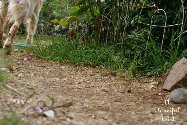 In the garden 15