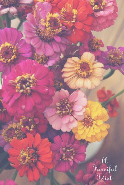 Fading flowers 6