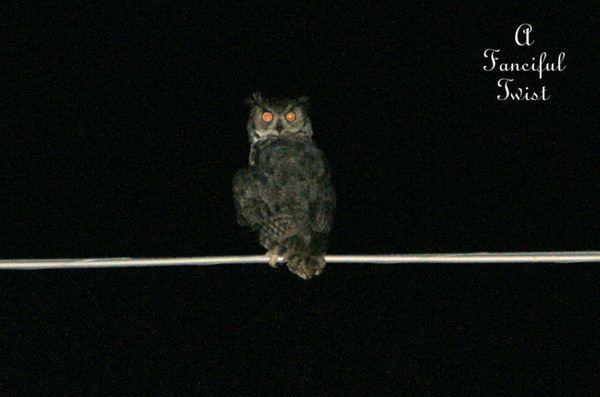 Owlie 4