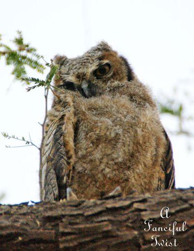Owlie days 1