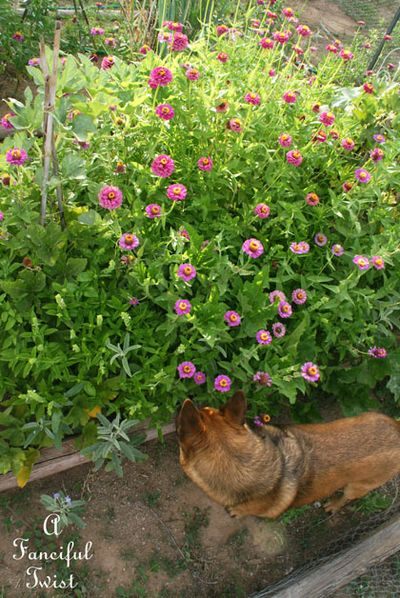 Summer garden 22