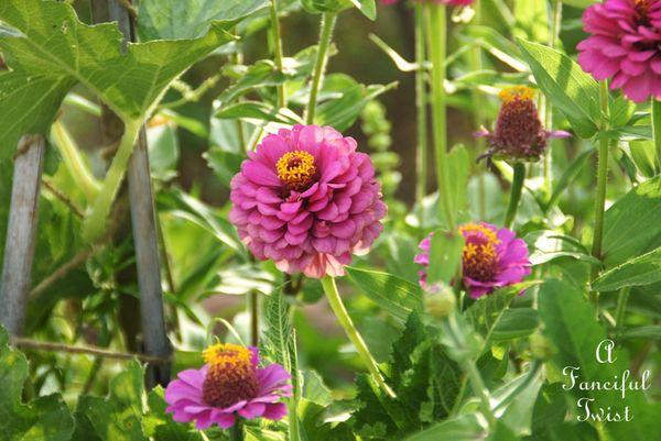 Summer garden 13