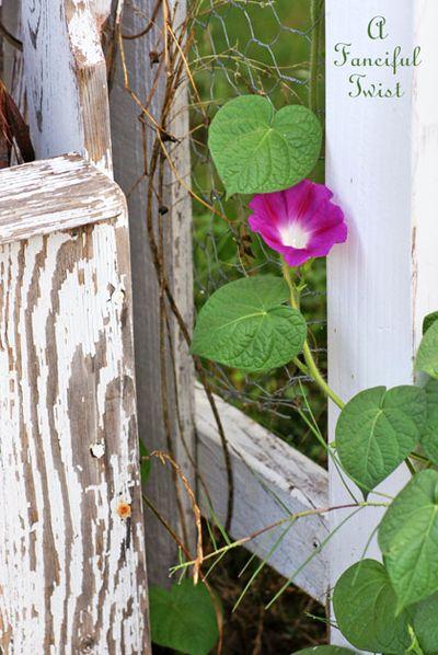 August garden 15