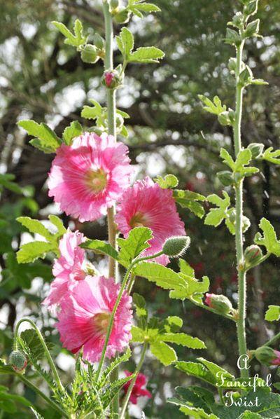 Vanessa valencia garden 4