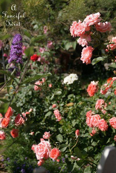 In the garden 8