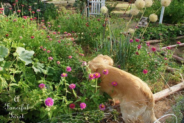 Summer garden 7