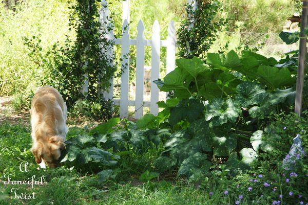 August garden 8