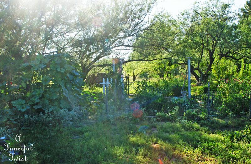 September garden 13