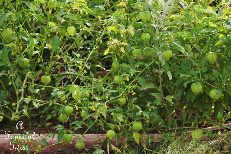 September garden 18