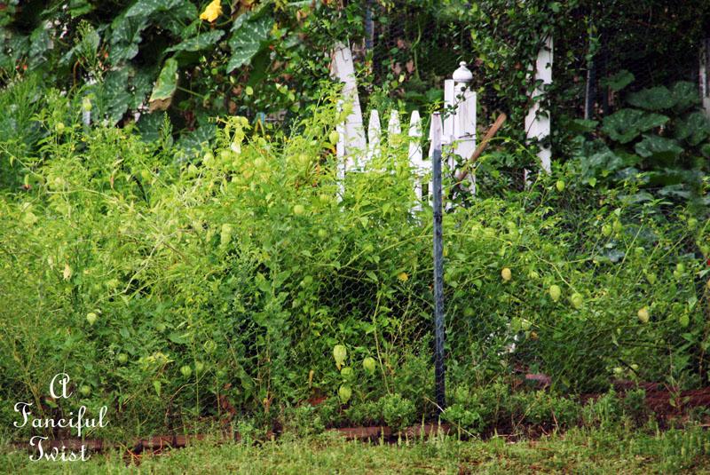 September garden 24
