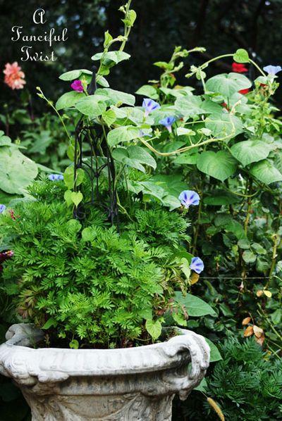 August garden 19