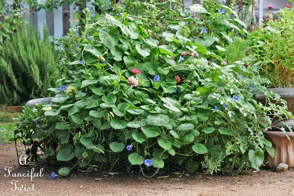 August garden 20