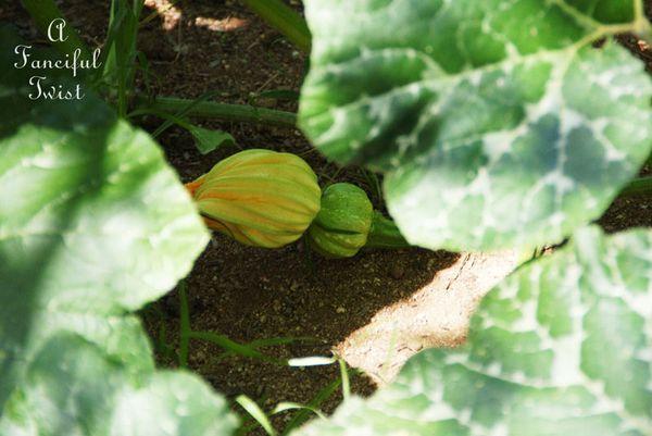 August garden 7