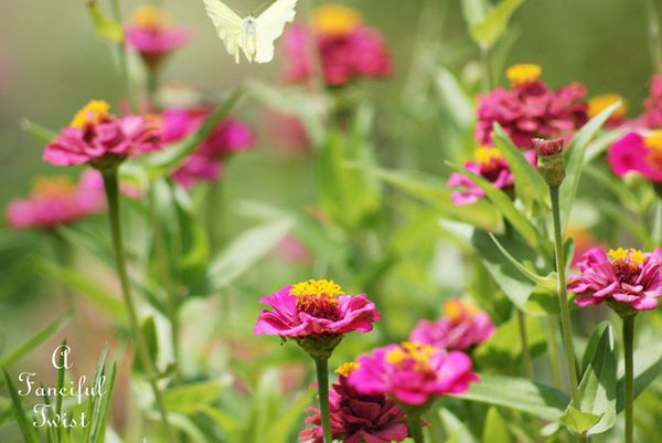 August garden 23