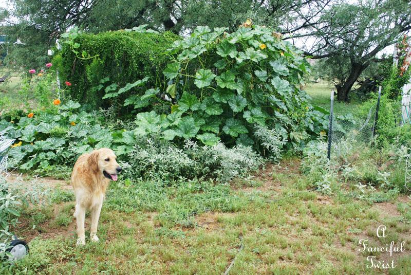 September garden 14
