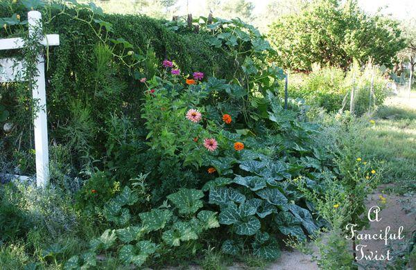 September garden 11