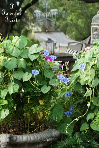 September garden 25