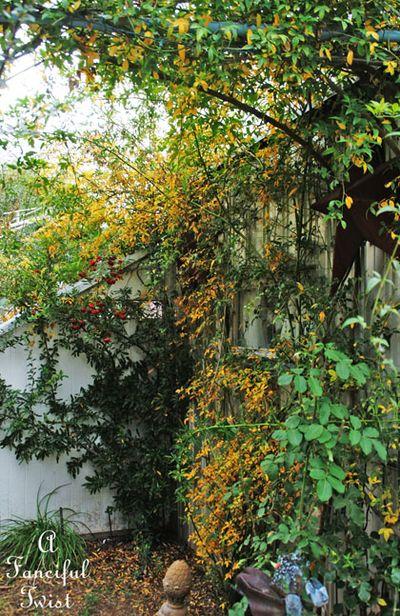 Fall garden 22