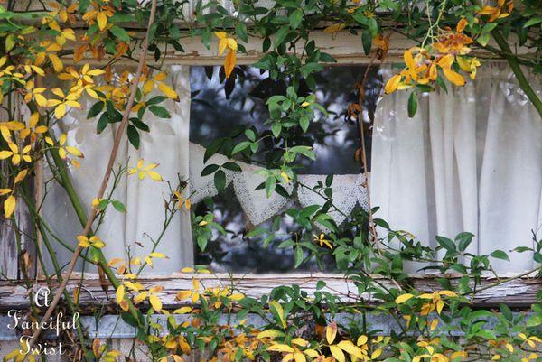 Fall garden 20