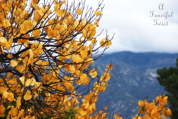Fall garden 14