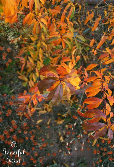 Fall garden 23