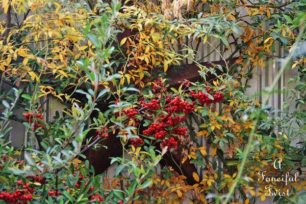 Fall garden 21