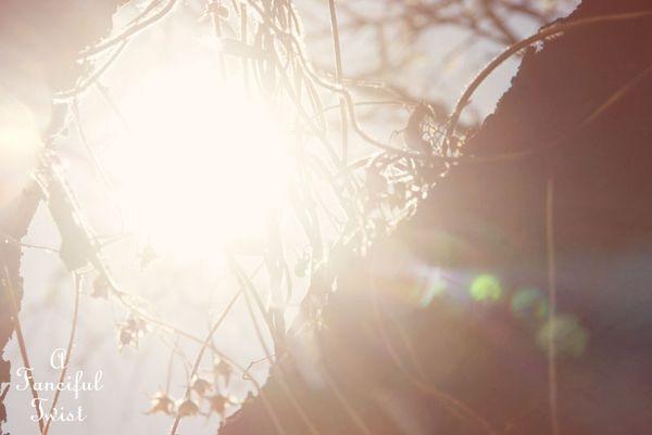Spring things 12
