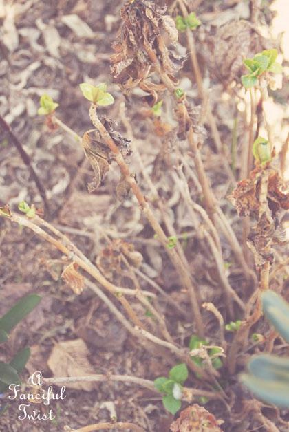 Spring things 16