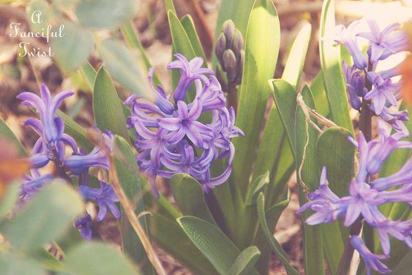 Spring things 17