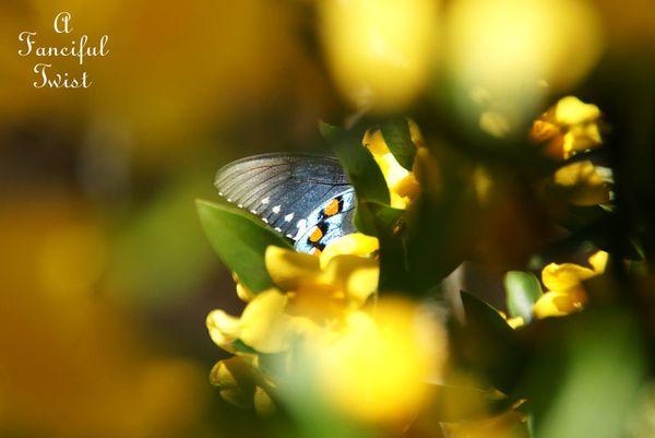 Blossoms 14