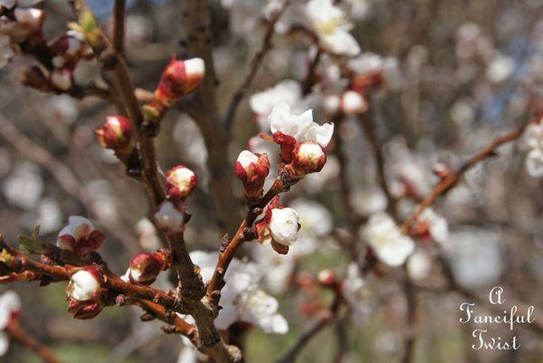 Blossoms 11