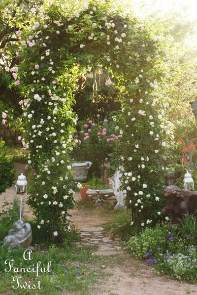 In my garden 13