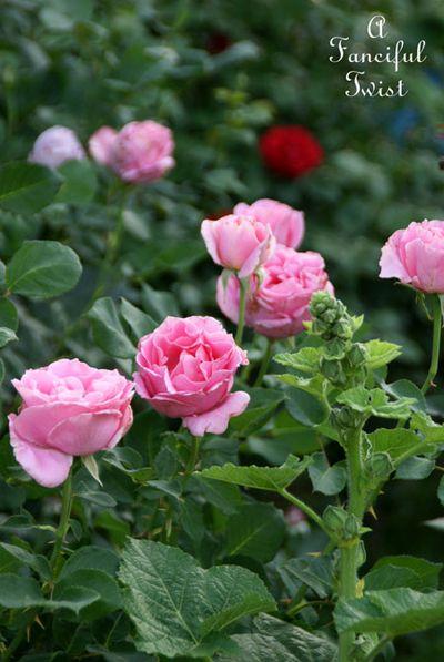 In my garden 20