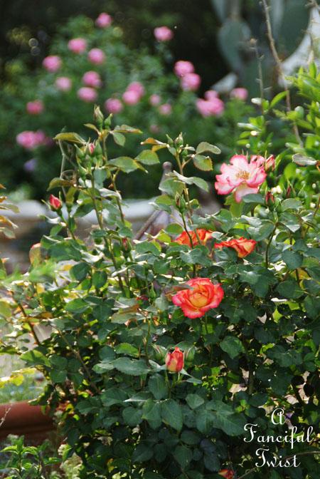 In my garden 24